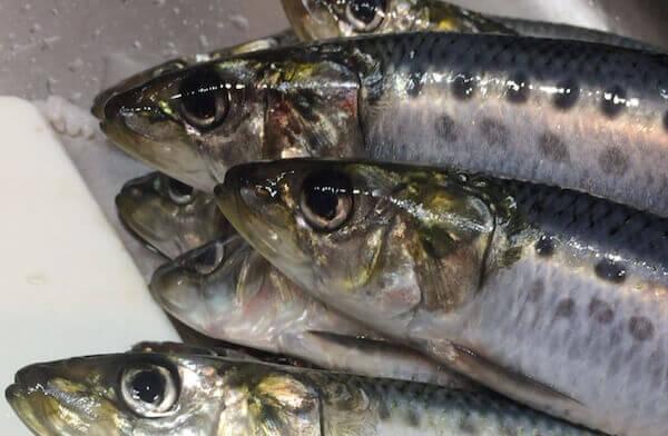 青空市場の新鮮な魚