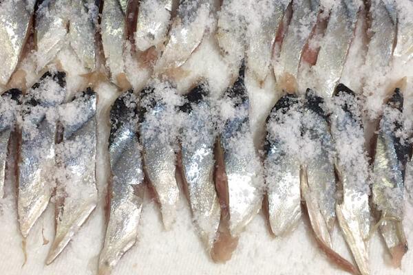太刀魚の餌